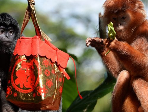 кому повезет в год обезьяны